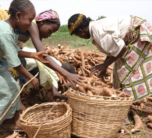 cassava production in Nigeria