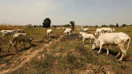 Nigerian state offers cows for guns to halt attacks