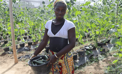 A woman farmer in Mali