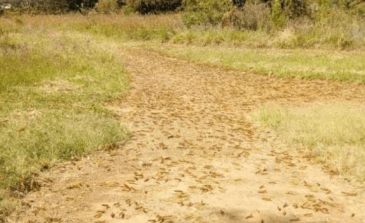 Pest control in Uganda