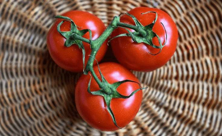 toxic tomatoes in kenya