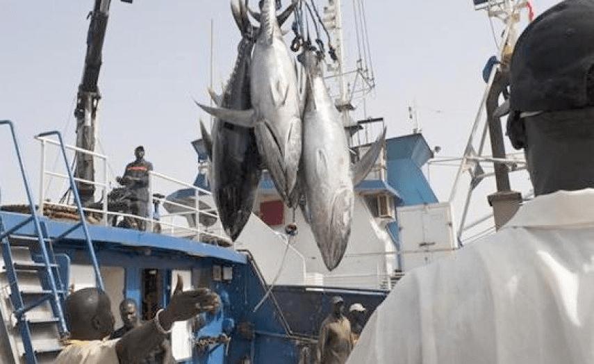 Senegal: Europe Wants Senegal's Fish but Rejects Its Migrants